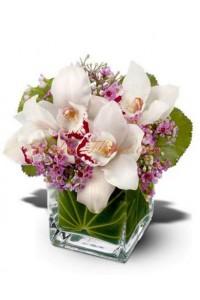Чудни орхидеи
