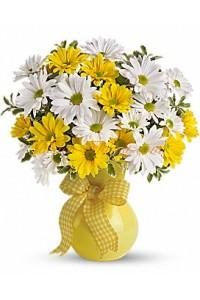 Слънчеви хризантеми