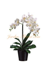 Бяла очарователна орхидея
