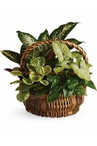 Аранжировка от декоративни саксийни растения