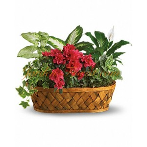 Композиция от цъфтящи и декоративни растения